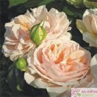 Mnohokvětá růže GARDEN OF ROSES