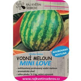 Roubovaný meloun vodní Mini Love
