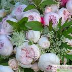 Mnohokvětá růže HERZOGIN CHRISTIANA