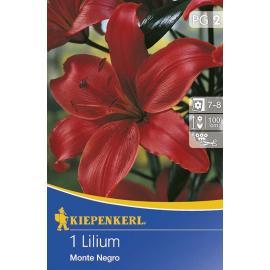 Lilie asijská Monte Negro