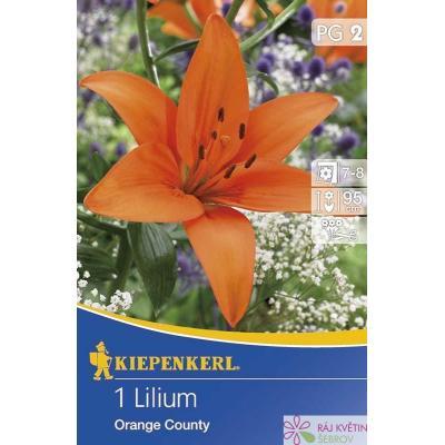 Lilie asijská Orange County