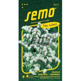Statice (limonka) WHITE