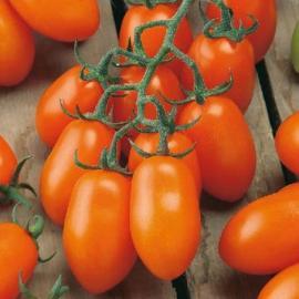 Roubované tyčkové rajče Mirado Orange