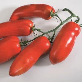 Roubované tyčkové rajče Cornabel