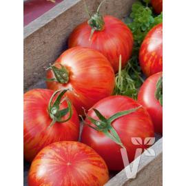 Roubované tyčkové rajče Tirouge