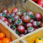 Roubované tyčkové rajče Solena Sweet Choco