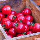 Roubované tyčkové rajče Solena Sweet Rose