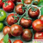Roubované tyčkové rajče Zebrino F1