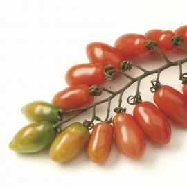 Roubované tyčkové rajče Trilly