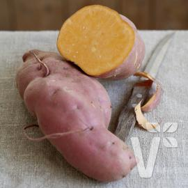 Sladké brambory - Batáty (Ipomea batatas) Erato Orange