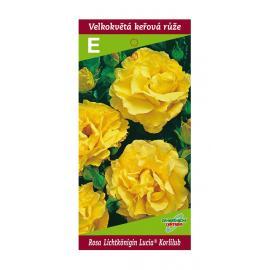 Sadové růže LICHTKÖNIGIN LUCIA