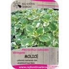 Plecranthus - Molice 2ks