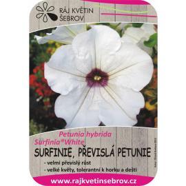 Surfinie - převislá petunie White 2ks